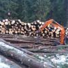Radarului Pădurilor a transformat România în importator de buștean