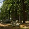Crește suprafaţa de păduri virgine