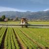 Spania, Franţa și România, cele mai mari vânzări de pesticide