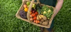 Agricultura ecologică, piață de 37 miliarde euro