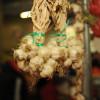 Mai mulţi bani pentru cultivatorii de usturoi