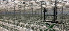 Succesul Agro IMM Invest