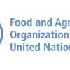 FAO dă ca sigură extinderea pestei în Asia