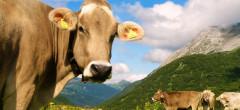 România a exportat animale vii de 302 milioane euro