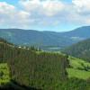 43% din teritoriul Uniunii Europene era acoperit de păduri