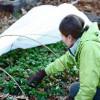 Subvenții pentru angajarea tinerilor în agricultură