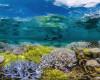 Cinci insule de corali au dispărut din cauza creșterii nivelului mării