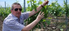 Cramele Recaș ajung liderul pieței de vinuri