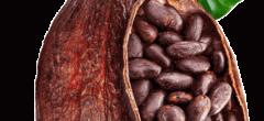 Coasta de Fildeş şi Ghana vând iar cacao