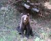 """Autorităţile se pregătesc pentru """"pielea ursului din pădure"""""""