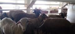 Oile de la Canalul Suez au ajuns la destinație