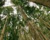 """Pădurea primește bani de la UE și """"urecheli"""" de la UNESCO"""
