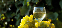 Producţia de vin a României a scăzut la 3,6 milioane hectolitri