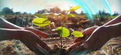 OMV Petrom plantează copaci de 1,5 milioane euro