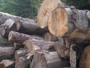 lemn 6 mic