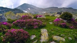 natura-2000 mediu munte arii protejate